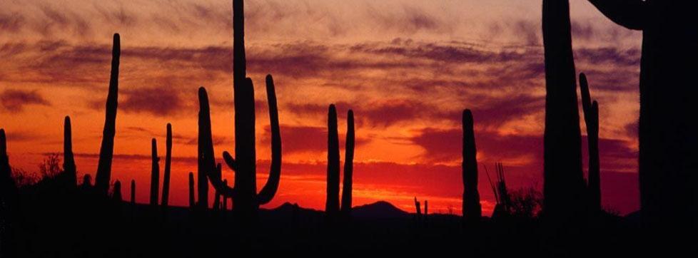496915desert_cactuses